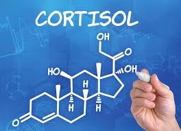 Stress Test Cortisol Tagesprofil